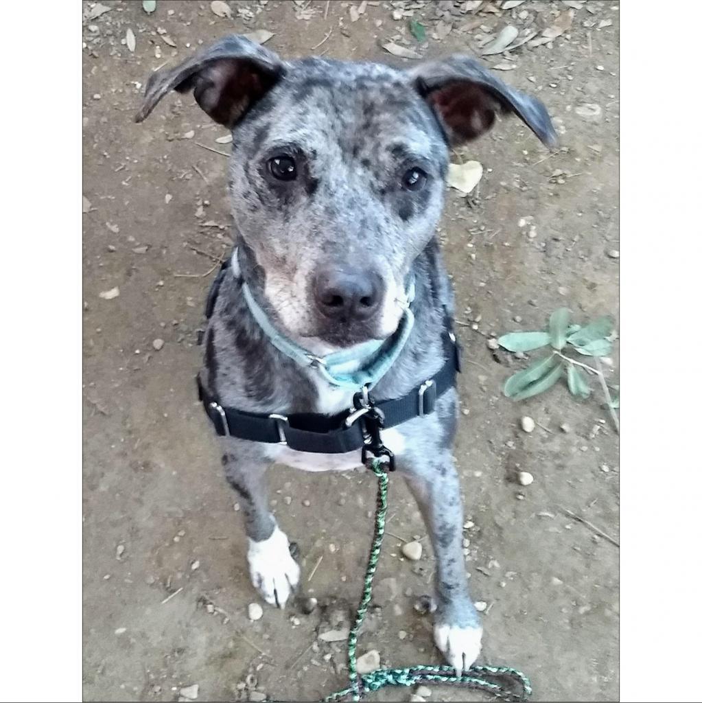 https://www.shelterluv.com/sites/default/files/animal_pics/464/2018/12/15/08/20181215082126.png
