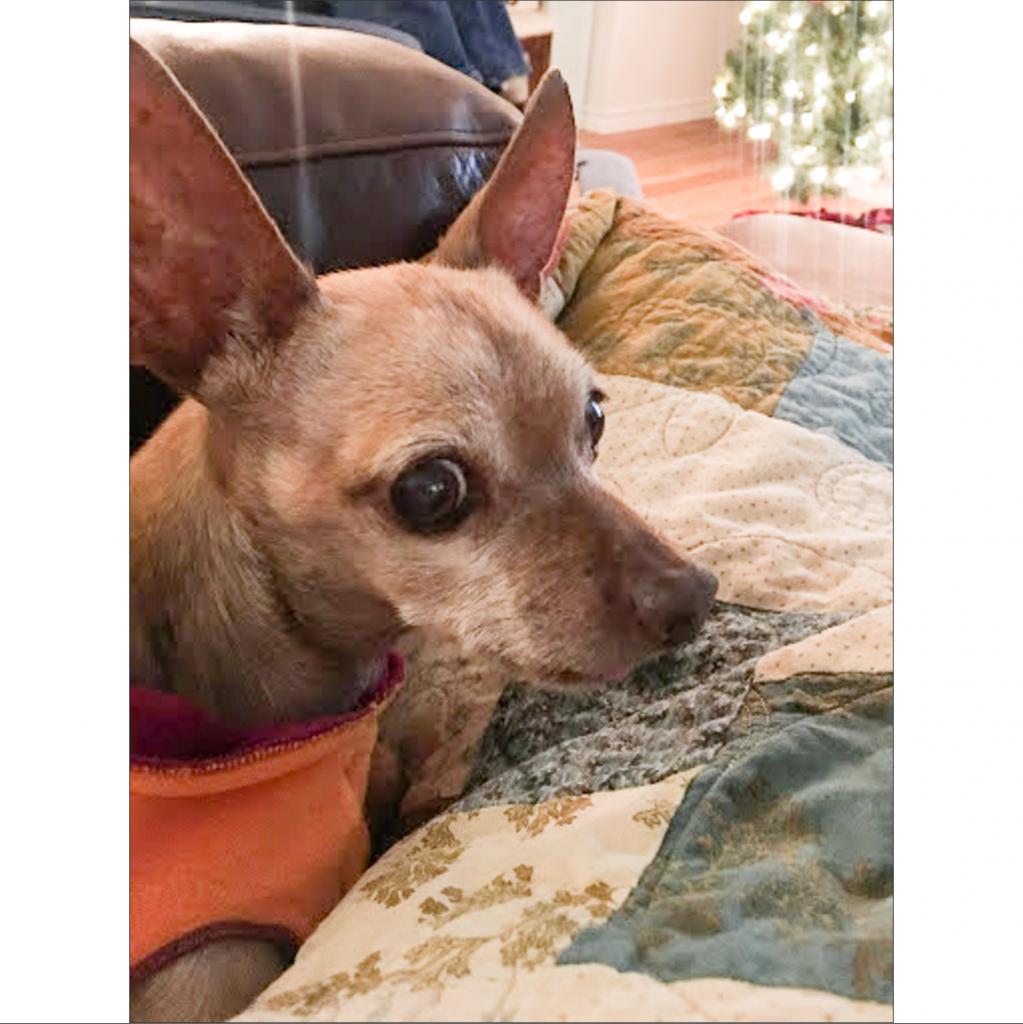 https://www.shelterluv.com/sites/default/files/animal_pics/464/2018/12/15/08/20181215083523.png