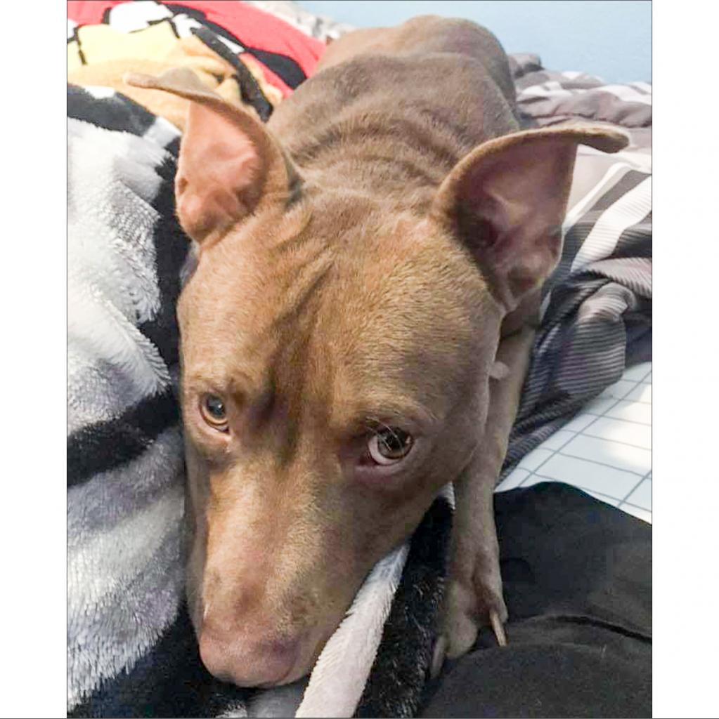 https://www.shelterluv.com/sites/default/files/animal_pics/464/2018/12/16/00/20181216001426.png