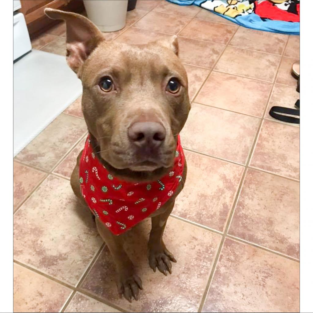 https://www.shelterluv.com/sites/default/files/animal_pics/464/2018/12/16/00/20181216001452.png