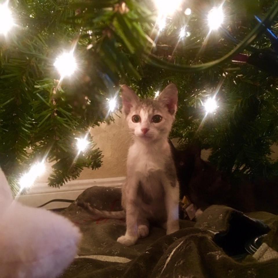 https://www.shelterluv.com/sites/default/files/animal_pics/464/2018/12/16/20/20181216200905.png