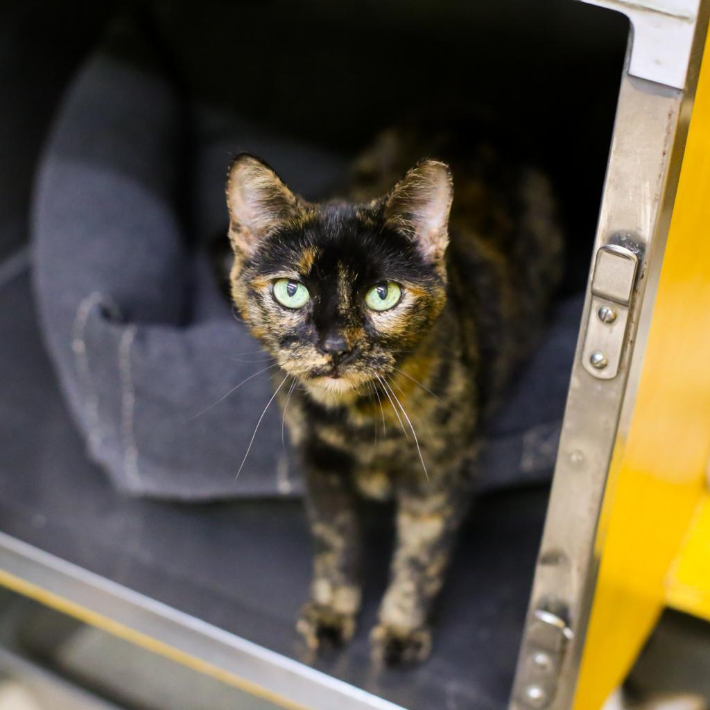 https://www.shelterluv.com/sites/default/files/animal_pics/464/2018/12/22/07/20181222072142.png