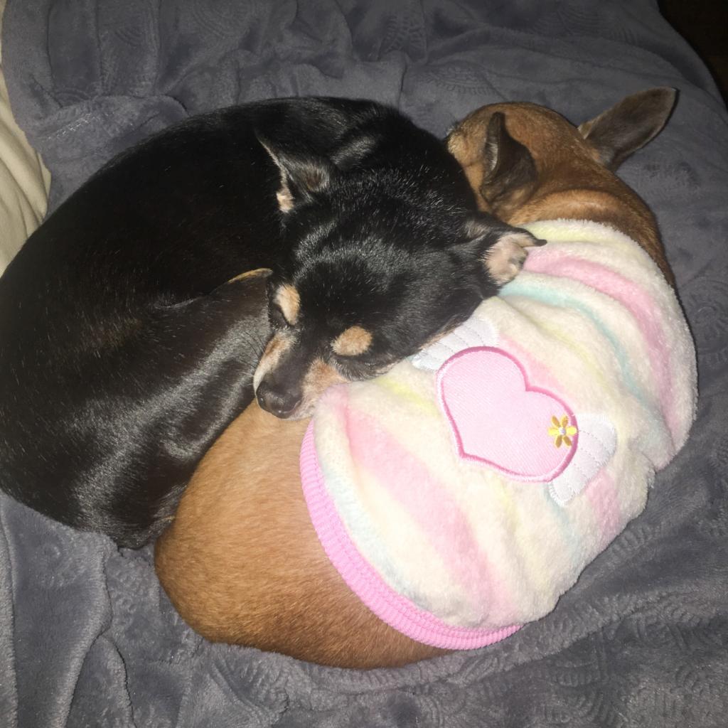 https://www.shelterluv.com/sites/default/files/animal_pics/464/2018/12/25/17/20181225175226.png