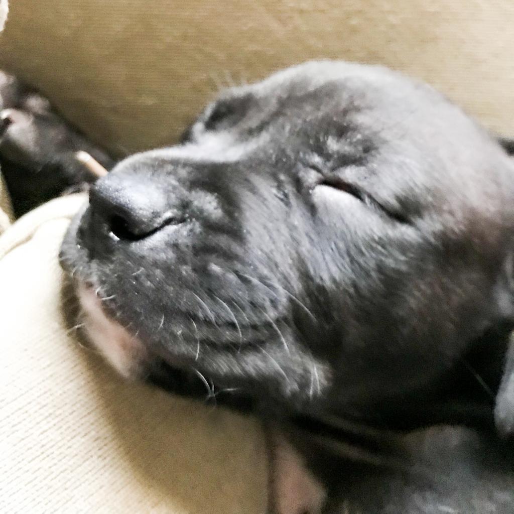 https://www.shelterluv.com/sites/default/files/animal_pics/464/2018/12/27/15/20181227150500.png