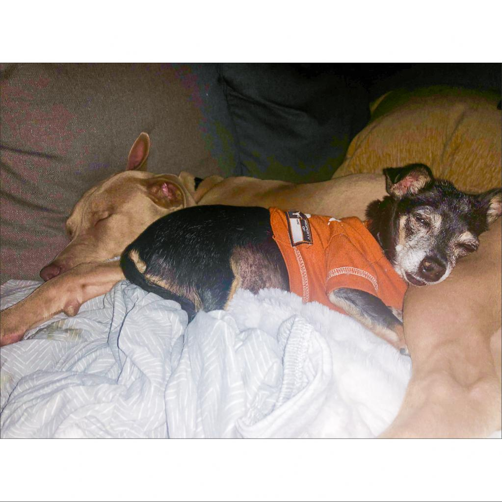 https://www.shelterluv.com/sites/default/files/animal_pics/464/2018/12/30/18/20181230181029.png
