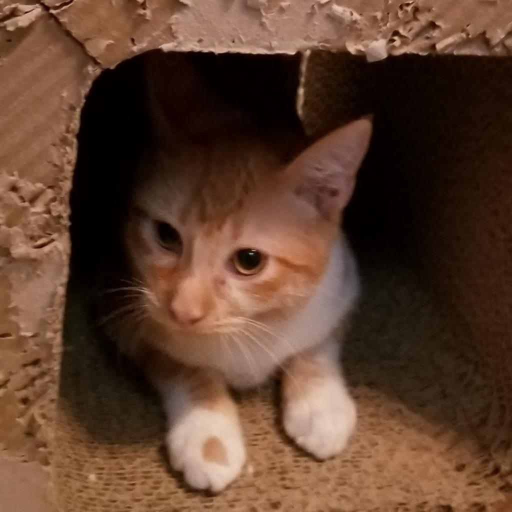 https://www.shelterluv.com/sites/default/files/animal_pics/464/2019/01/01/14/20190101141026.png