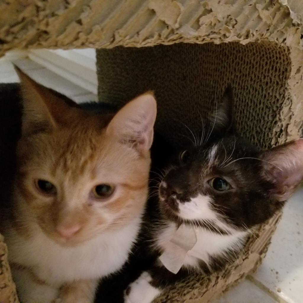 https://www.shelterluv.com/sites/default/files/animal_pics/464/2019/01/01/14/20190101141107.png