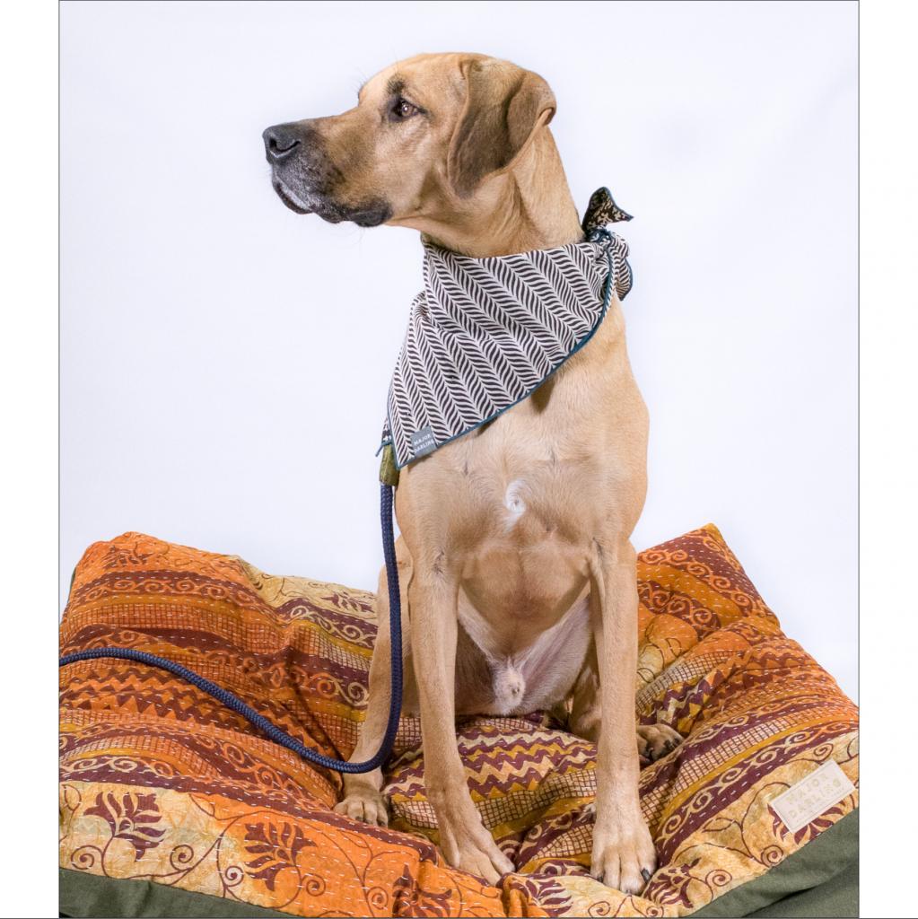 https://www.shelterluv.com/sites/default/files/animal_pics/464/2019/01/01/16/20190101161626.png