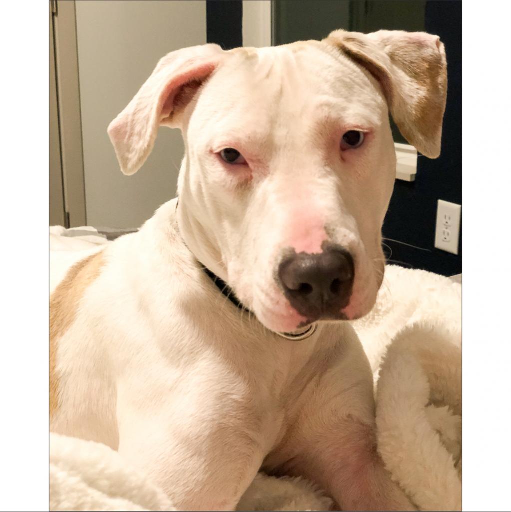 https://www.shelterluv.com/sites/default/files/animal_pics/464/2019/01/04/16/20190104163546.png