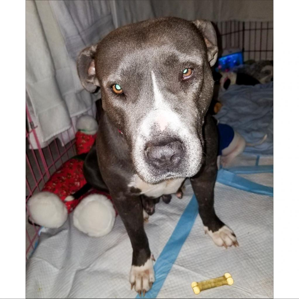 https://www.shelterluv.com/sites/default/files/animal_pics/464/2019/01/04/16/20190104164909.png