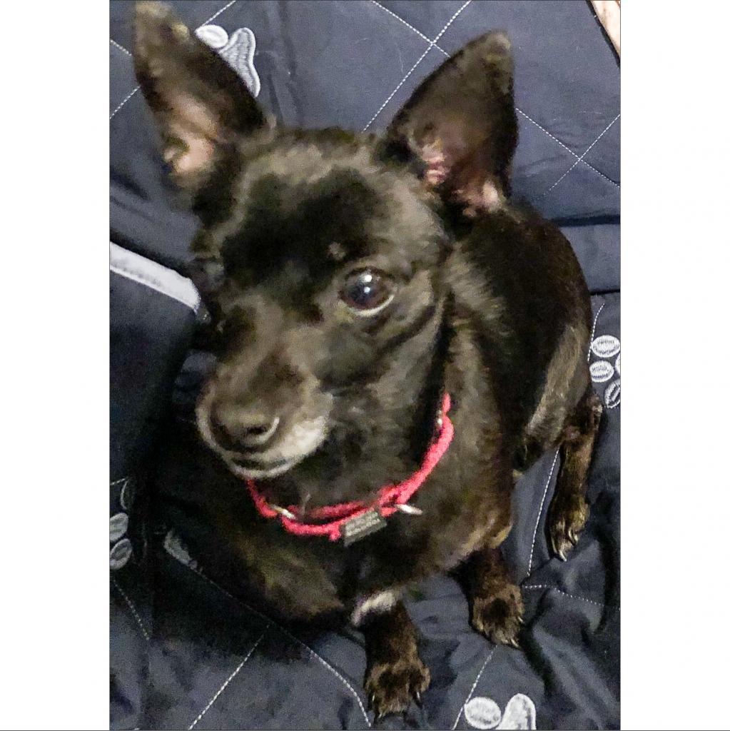 https://www.shelterluv.com/sites/default/files/animal_pics/464/2019/01/06/00/20190106000005.png