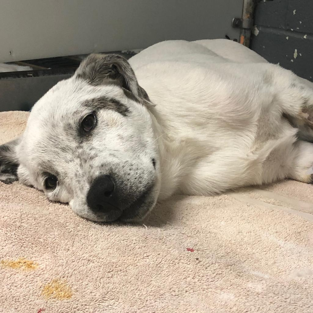 https://www.shelterluv.com/sites/default/files/animal_pics/464/2019/01/07/08/20190107082844.png