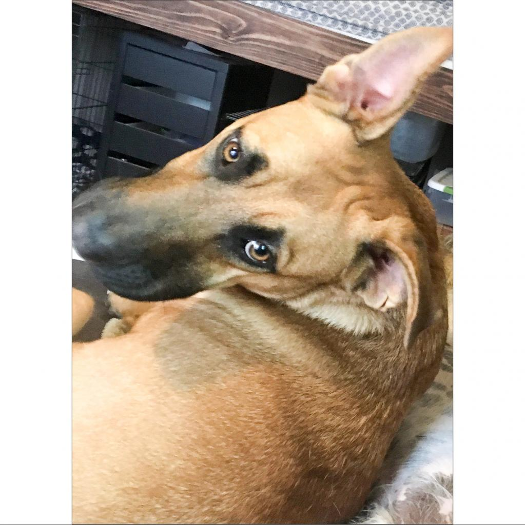 https://www.shelterluv.com/sites/default/files/animal_pics/464/2019/01/07/09/20190107094201.png
