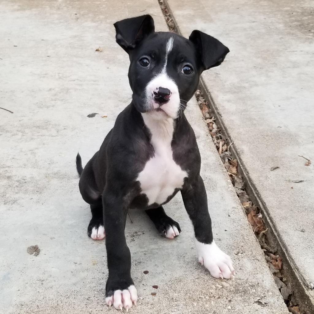 https://www.shelterluv.com/sites/default/files/animal_pics/464/2019/01/09/23/20190109231559.png