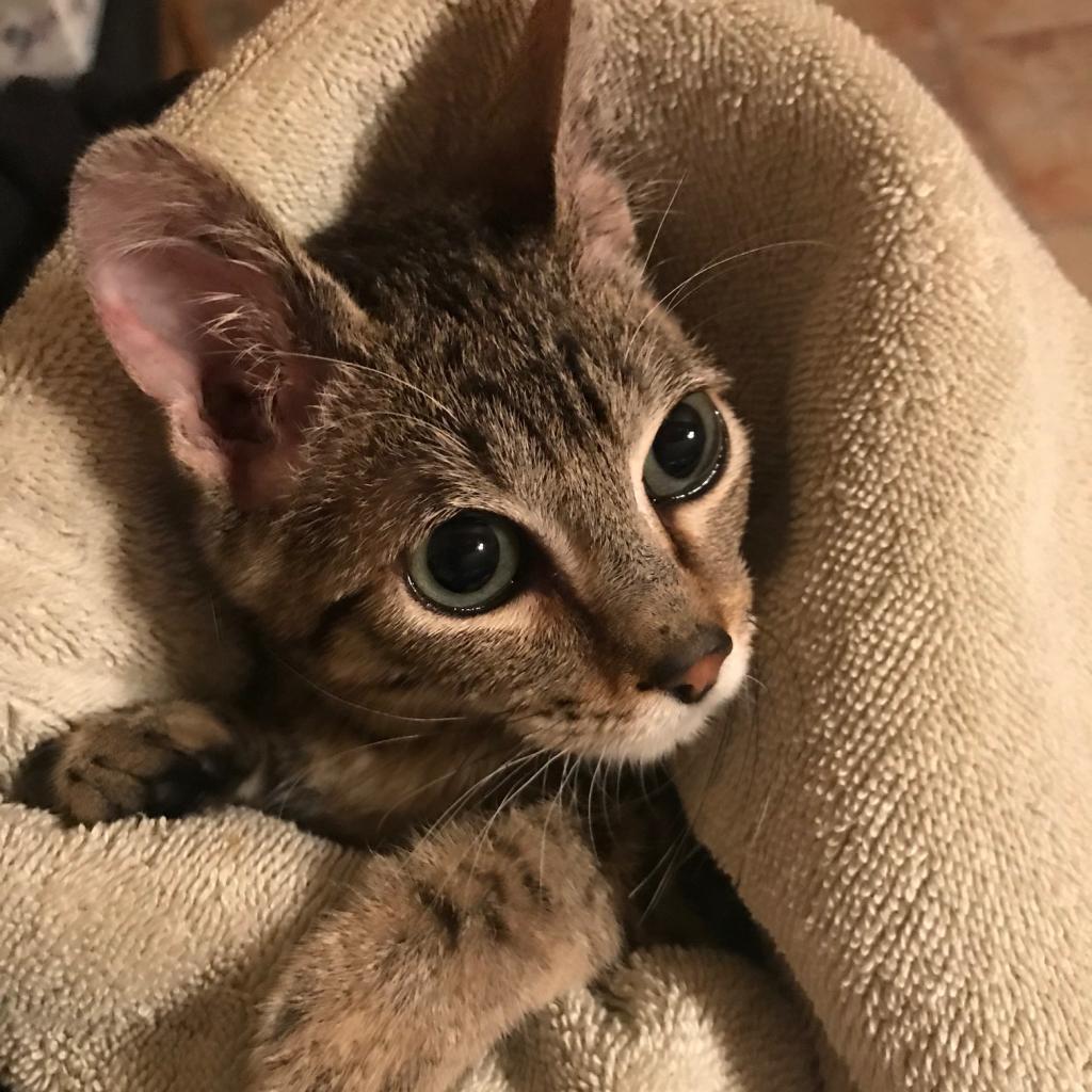 https://www.shelterluv.com/sites/default/files/animal_pics/464/2019/01/10/19/20190110190737.png