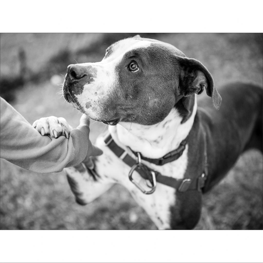 https://www.shelterluv.com/sites/default/files/animal_pics/464/2019/01/11/20/20190111200710.png