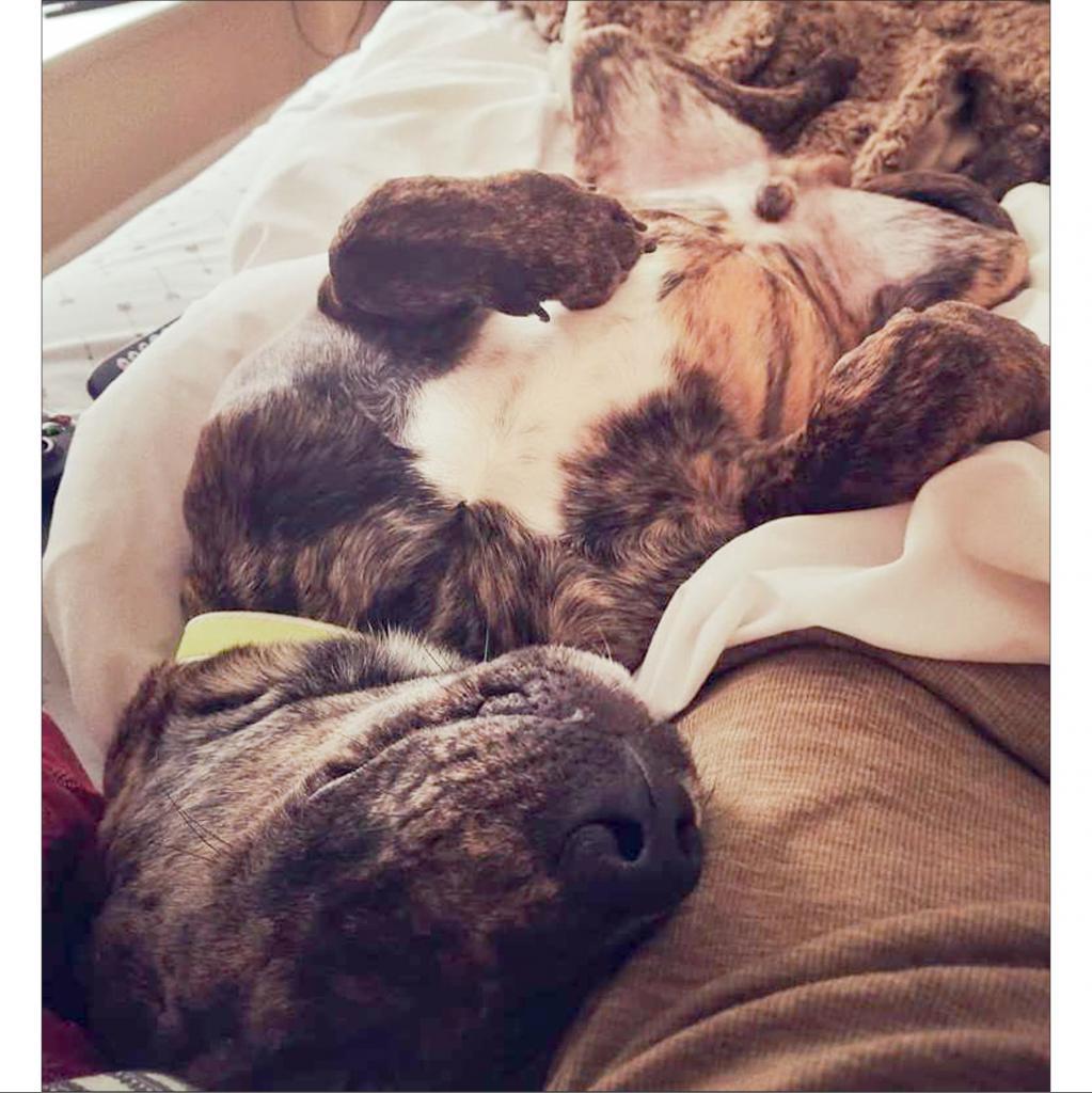 https://www.shelterluv.com/sites/default/files/animal_pics/464/2019/01/11/21/20190111211002.png