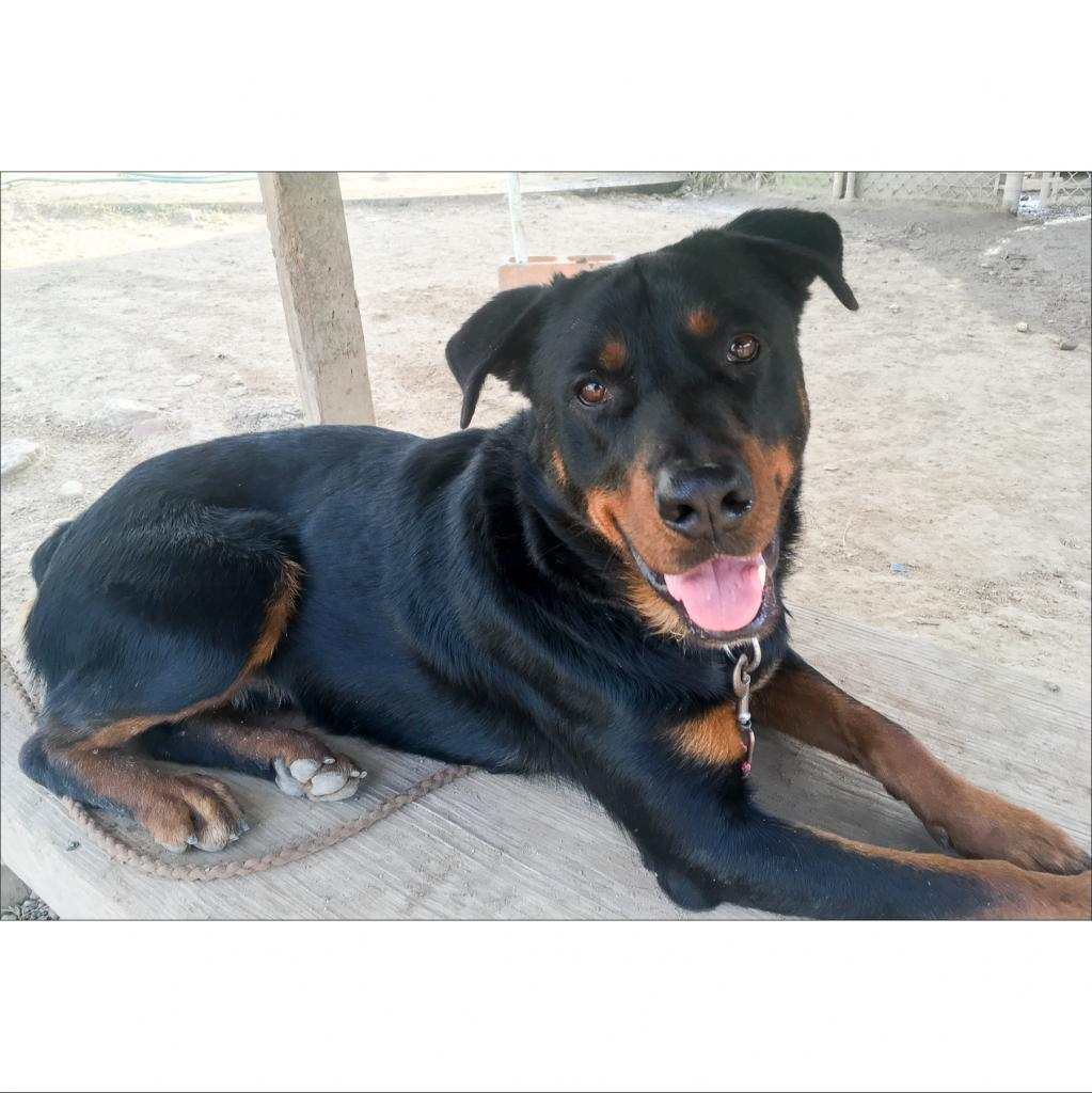 https://www.shelterluv.com/sites/default/files/animal_pics/464/2019/01/13/21/20190113214331.png
