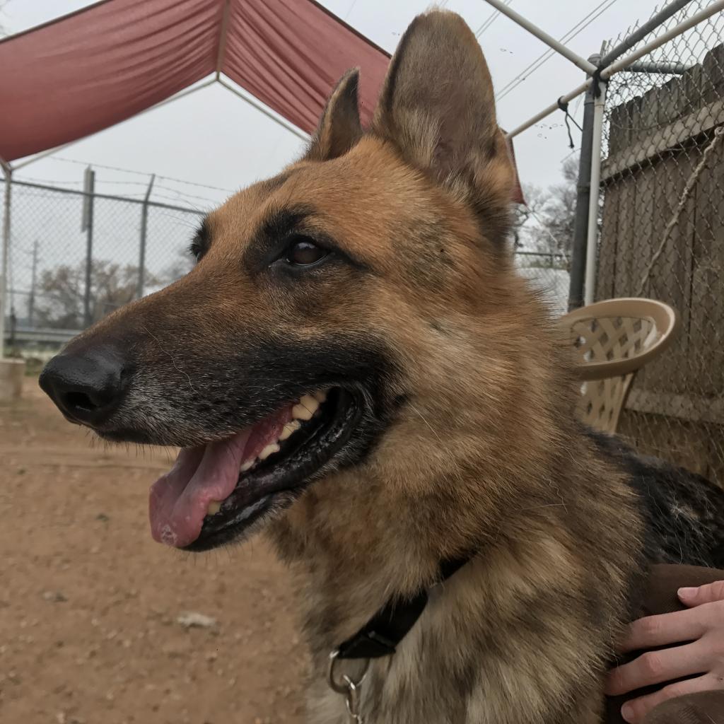 https://www.shelterluv.com/sites/default/files/animal_pics/464/2019/01/15/10/20190115104555.png