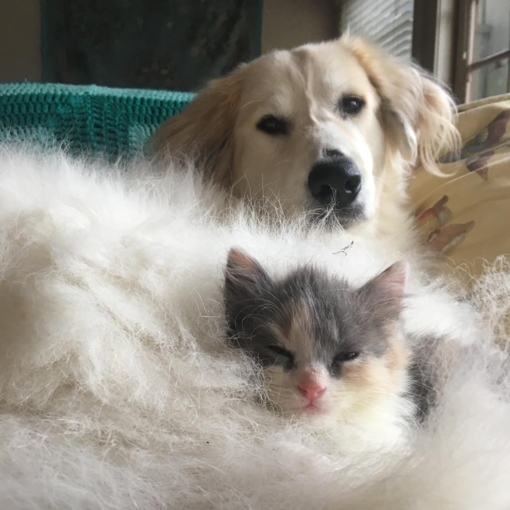 https://www.shelterluv.com/sites/default/files/animal_pics/464/2019/01/16/19/20190116192416.png