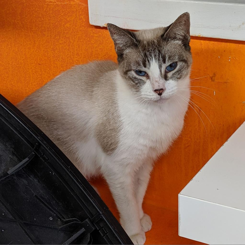 https://www.shelterluv.com/sites/default/files/animal_pics/464/2019/01/20/17/20190120173539.png