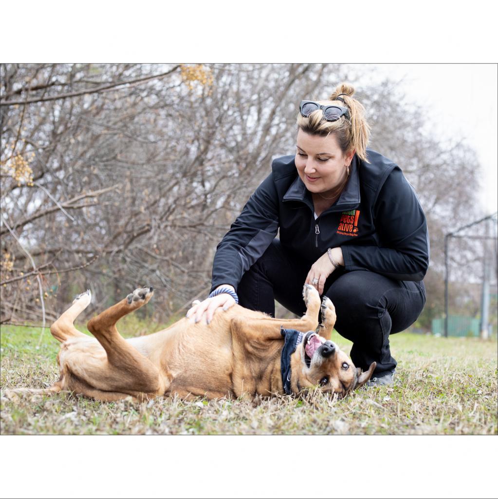 https://www.shelterluv.com/sites/default/files/animal_pics/464/2019/01/21/09/20190121092711.png
