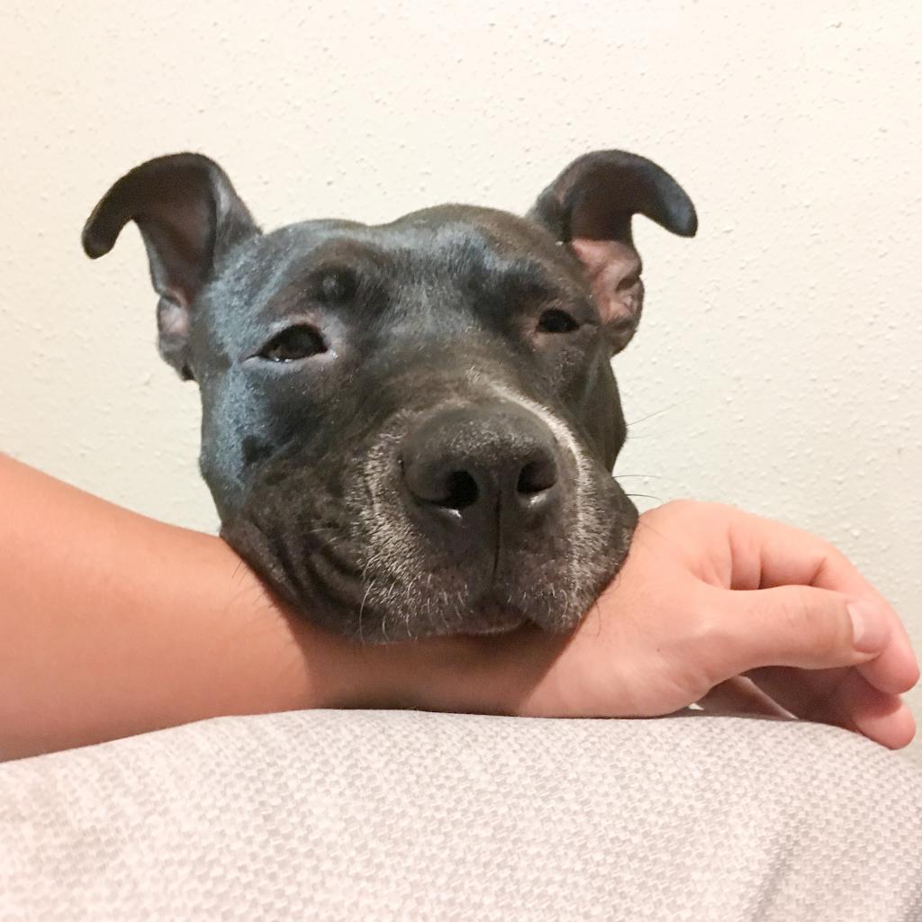 https://www.shelterluv.com/sites/default/files/animal_pics/464/2019/01/21/22/20190121220859.png