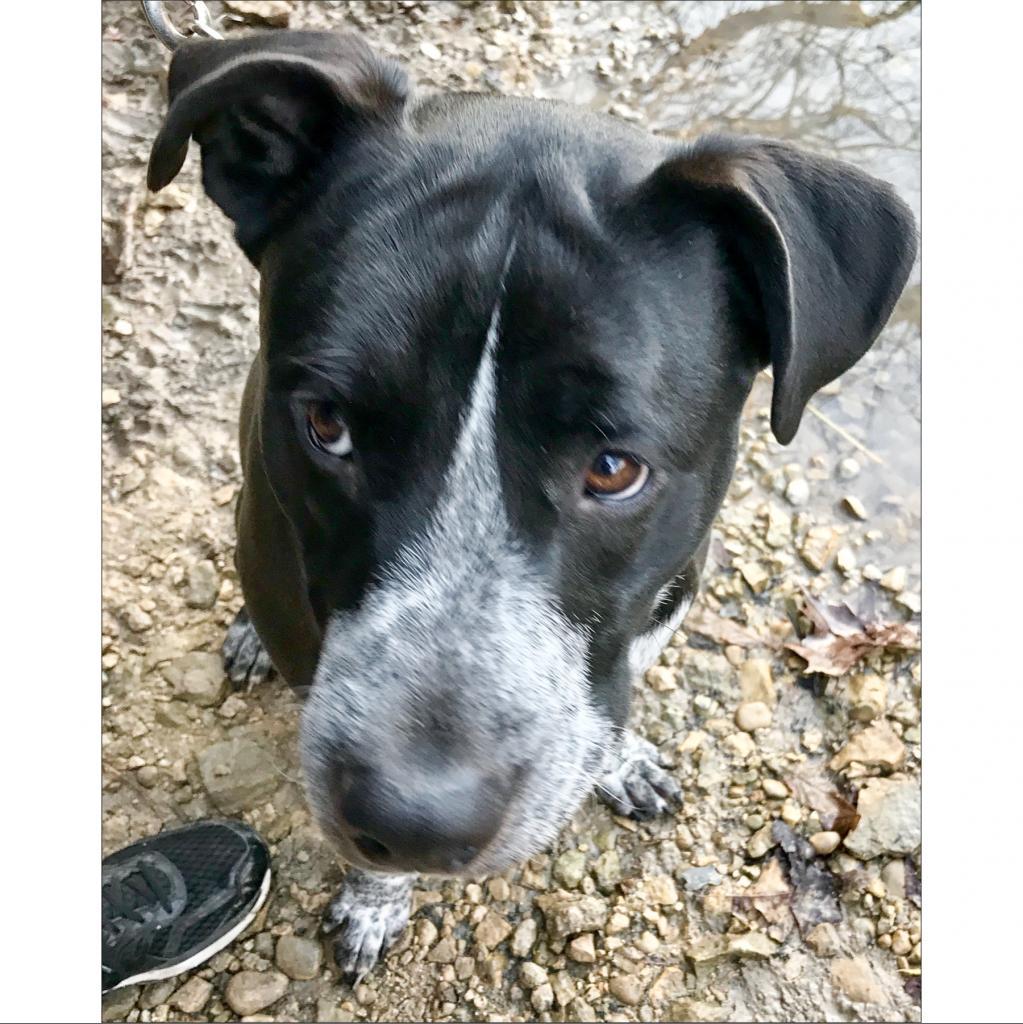 https://www.shelterluv.com/sites/default/files/animal_pics/464/2019/01/23/08/20190123085351.png