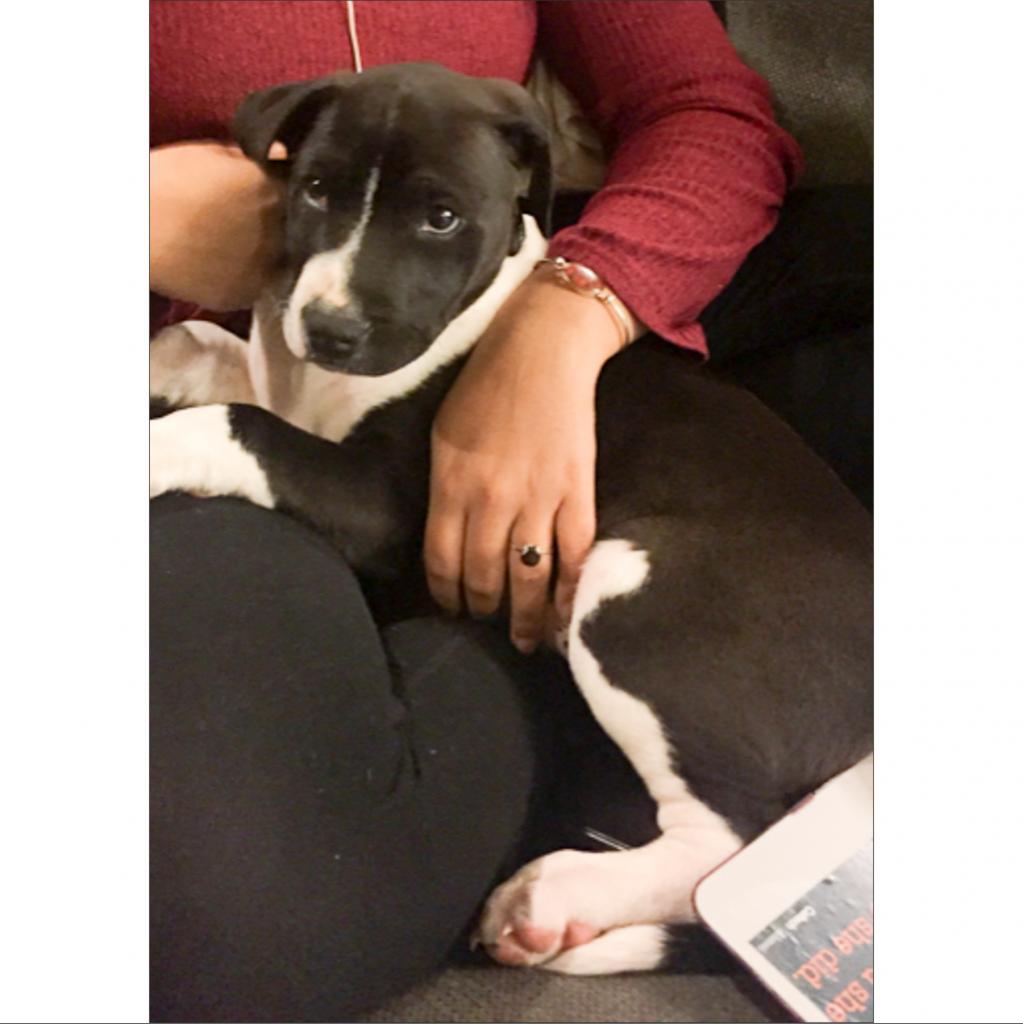 https://www.shelterluv.com/sites/default/files/animal_pics/464/2019/01/24/23/20190124235454.png