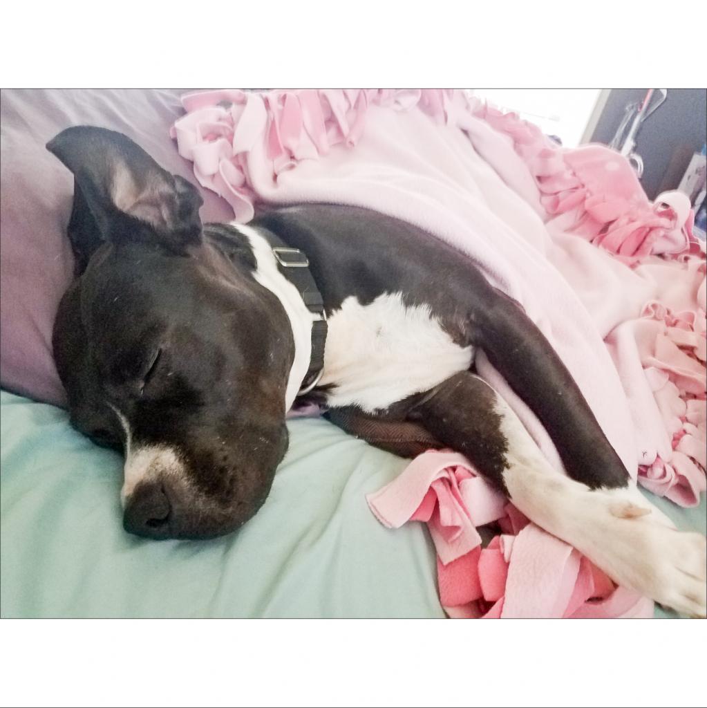 https://www.shelterluv.com/sites/default/files/animal_pics/464/2019/01/26/15/20190126150348.png