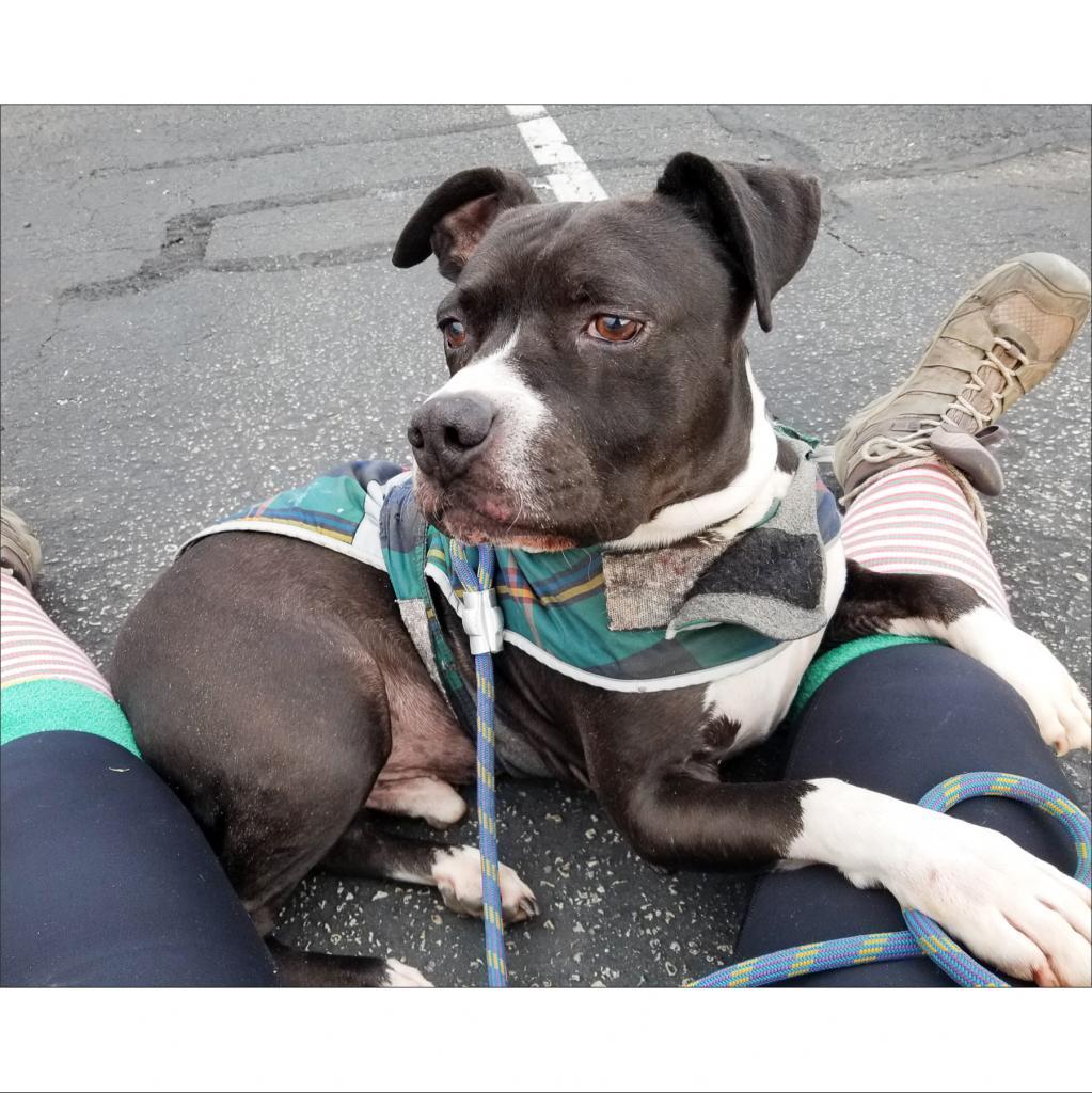 https://www.shelterluv.com/sites/default/files/animal_pics/464/2019/01/26/15/20190126150519.png