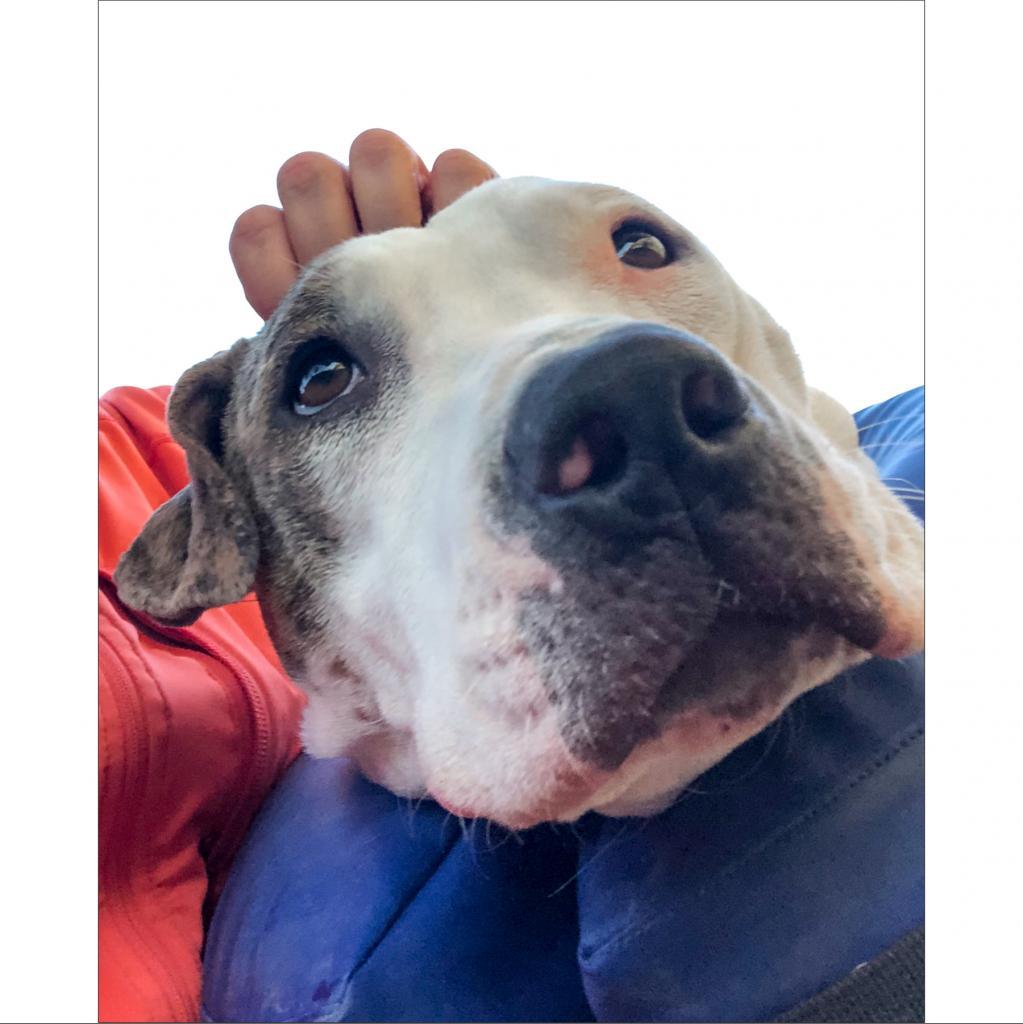 https://www.shelterluv.com/sites/default/files/animal_pics/464/2019/01/26/16/20190126160430.png