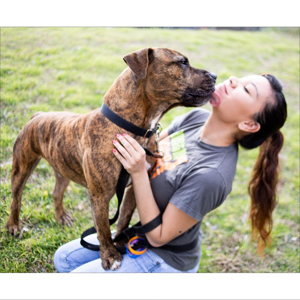 https://www.shelterluv.com/sites/default/files/animal_pics/464/2019/01/27/23/20190127234914.png