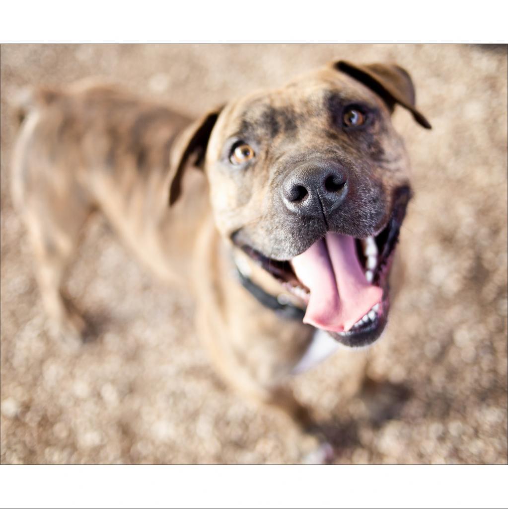 https://www.shelterluv.com/sites/default/files/animal_pics/464/2019/01/27/23/20190127235152.png