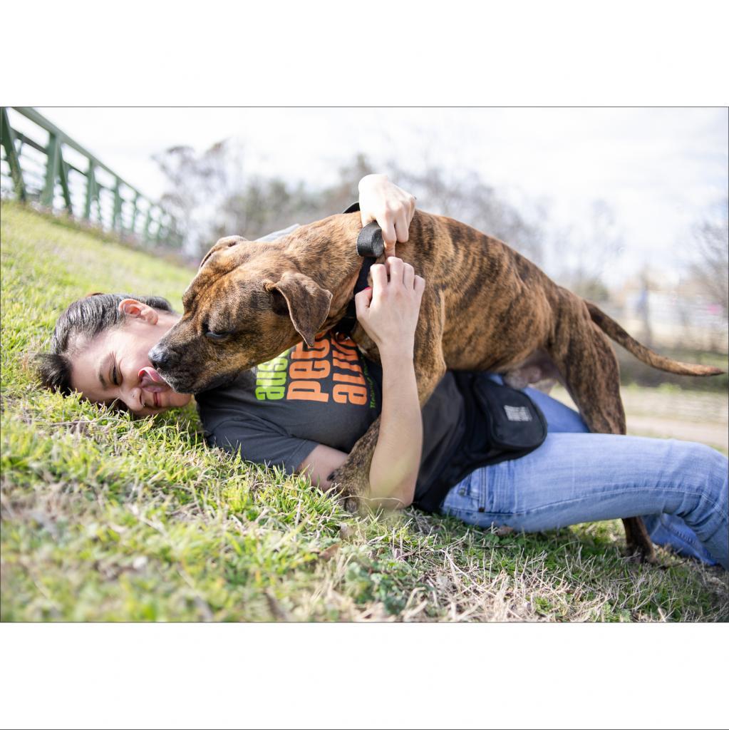 https://www.shelterluv.com/sites/default/files/animal_pics/464/2019/01/27/23/20190127235229.png