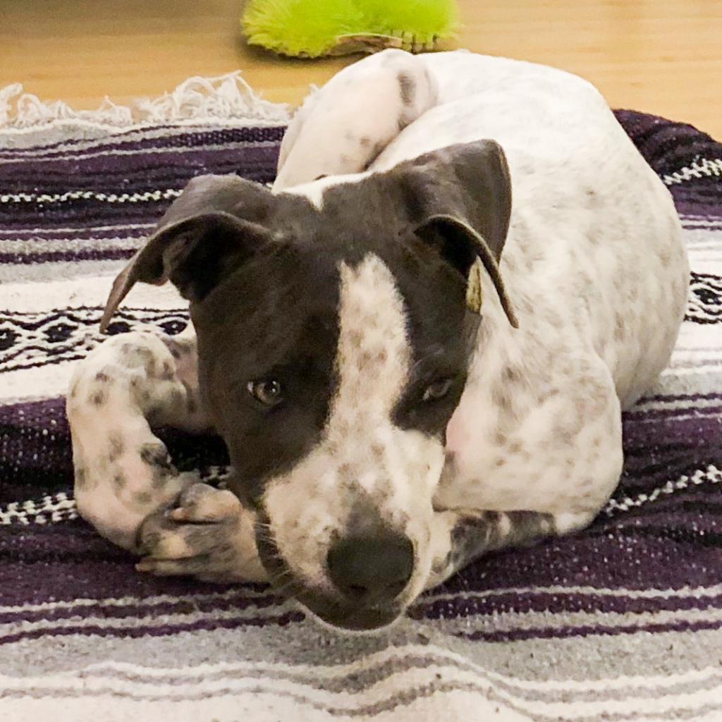 https://www.shelterluv.com/sites/default/files/animal_pics/464/2019/01/31/01/20190131015735.png