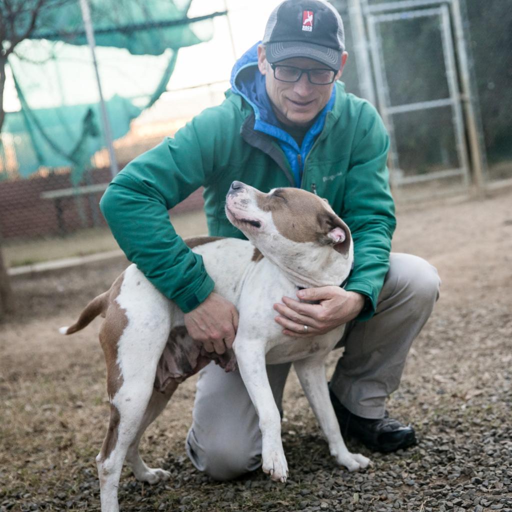 https://www.shelterluv.com/sites/default/files/animal_pics/464/2019/01/31/22/20190131220400.png