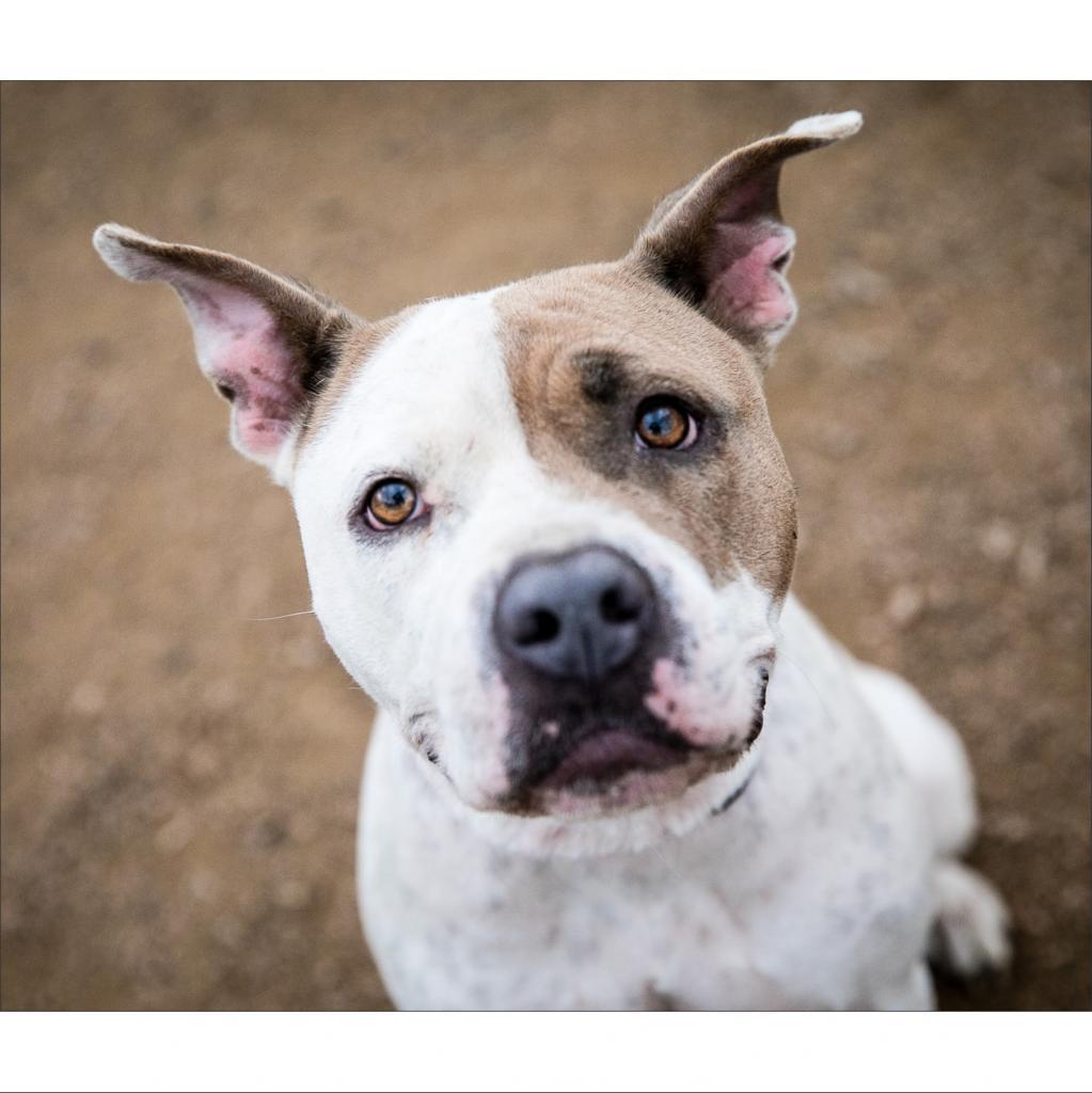 https://www.shelterluv.com/sites/default/files/animal_pics/464/2019/01/31/22/20190131220432.png