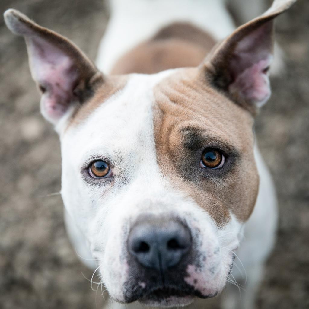 https://www.shelterluv.com/sites/default/files/animal_pics/464/2019/01/31/22/20190131220506.png