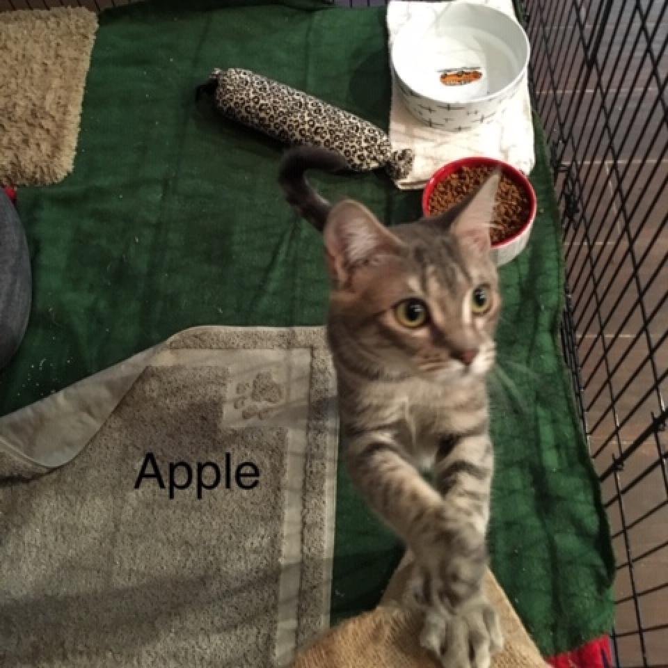 Photo of Apple 25