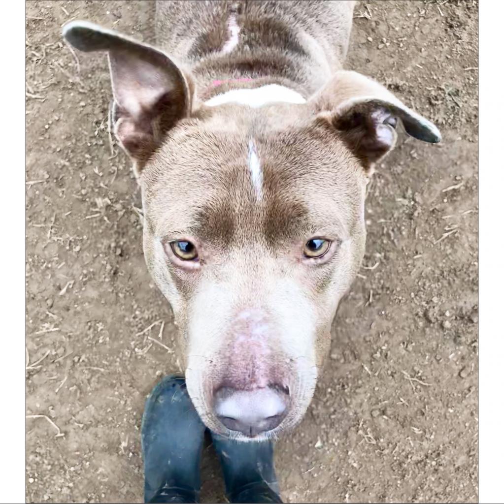 https://www.shelterluv.com/sites/default/files/animal_pics/464/2019/02/04/16/20190204162704.png
