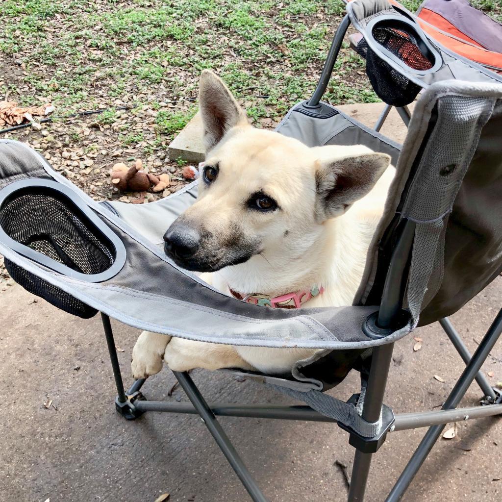 https://www.shelterluv.com/sites/default/files/animal_pics/464/2019/02/04/16/20190204163506.png