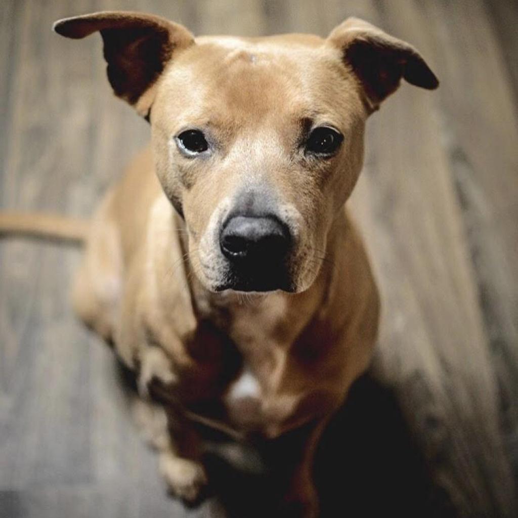 https://www.shelterluv.com/sites/default/files/animal_pics/464/2019/02/05/17/20190205170201.png