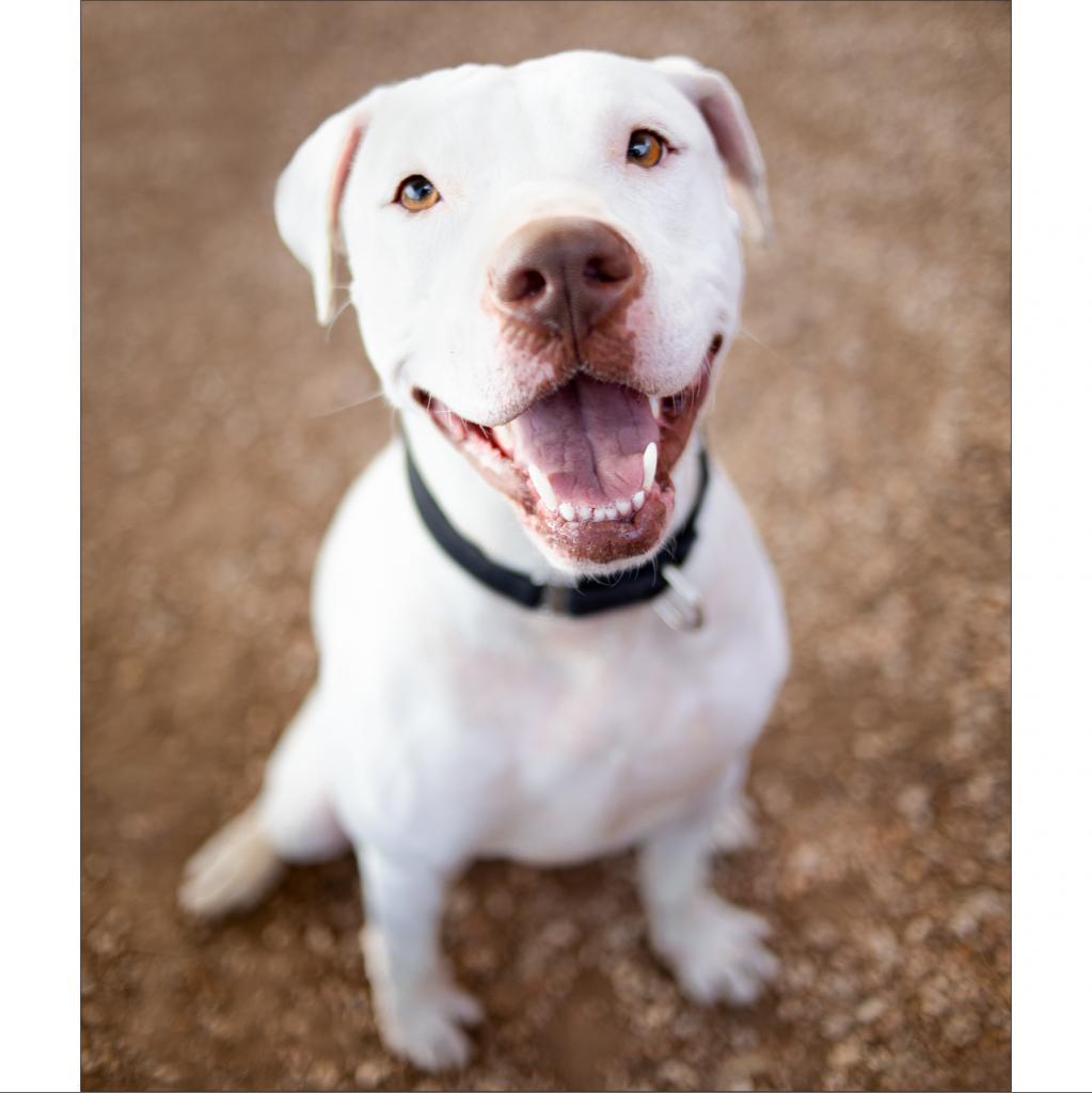 https://www.shelterluv.com/sites/default/files/animal_pics/464/2019/02/05/22/20190205222644.png