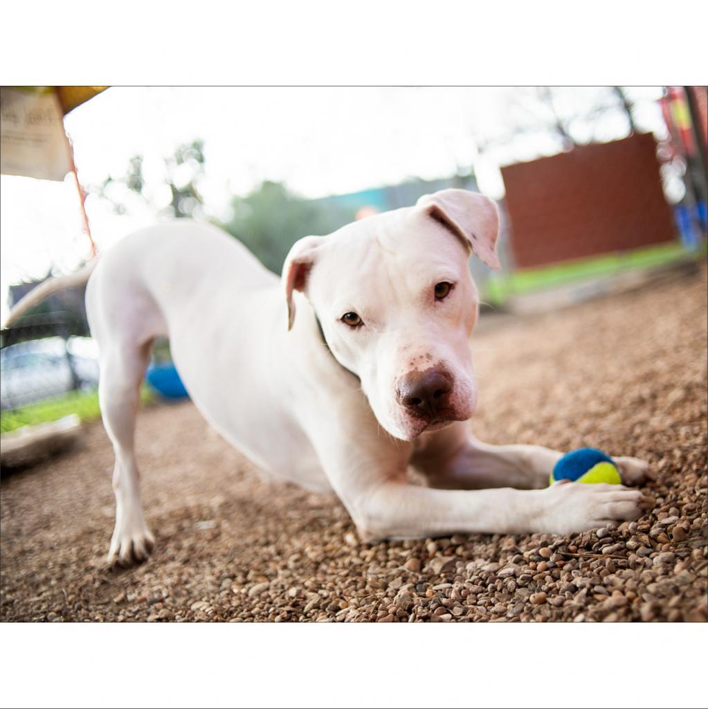 https://www.shelterluv.com/sites/default/files/animal_pics/464/2019/02/05/22/20190205223034.png