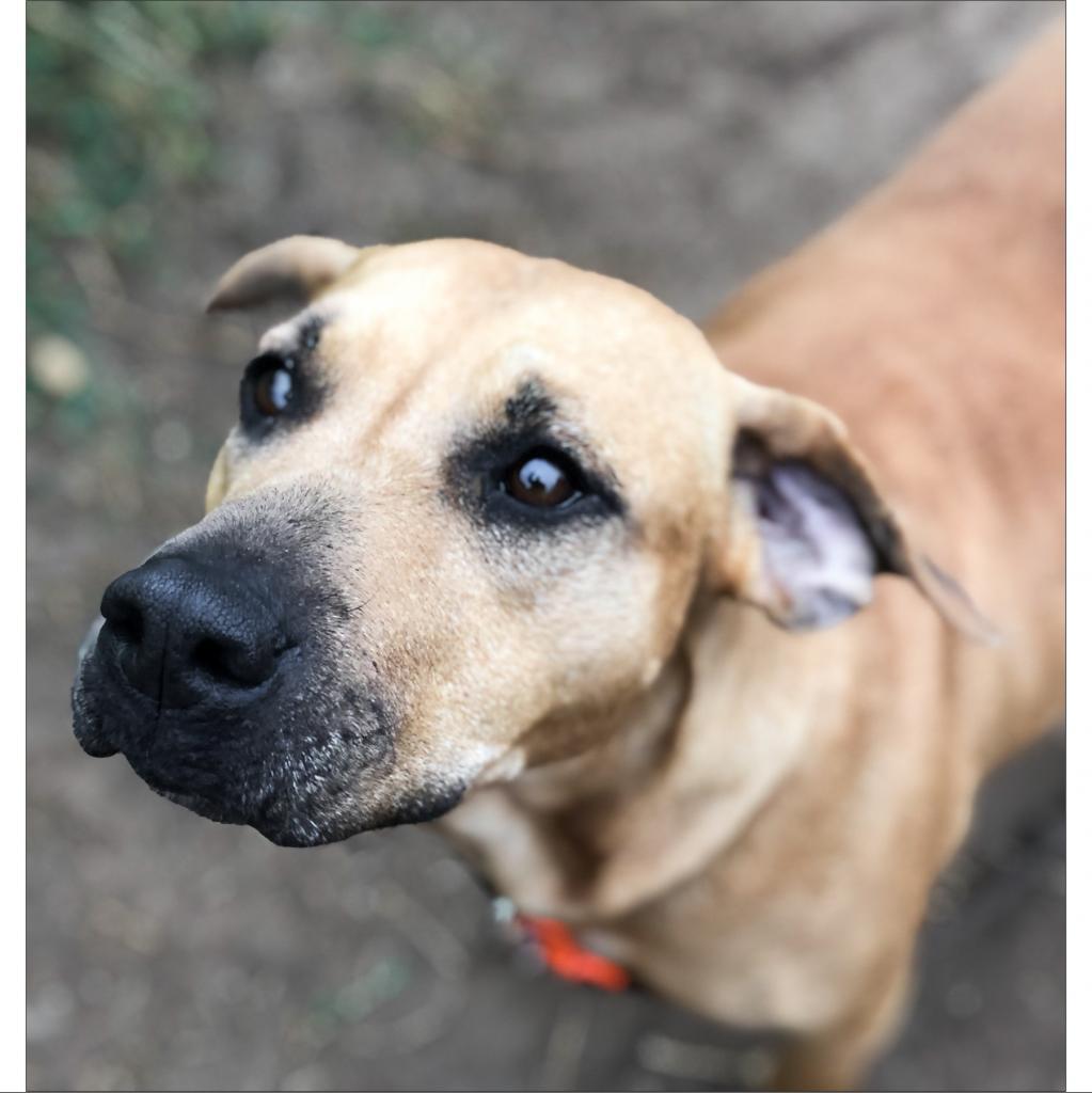 https://www.shelterluv.com/sites/default/files/animal_pics/464/2019/02/07/09/20190207095907.png