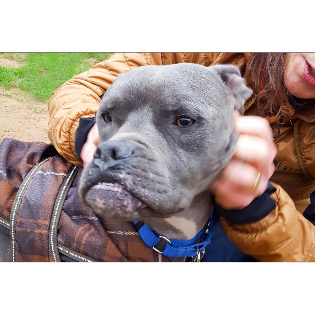https://www.shelterluv.com/sites/default/files/animal_pics/464/2019/02/09/00/20190209003451.png
