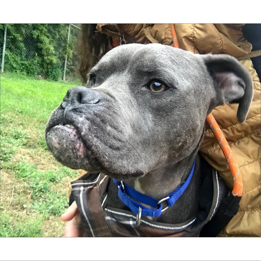 https://www.shelterluv.com/sites/default/files/animal_pics/464/2019/02/09/00/20190209003521.png