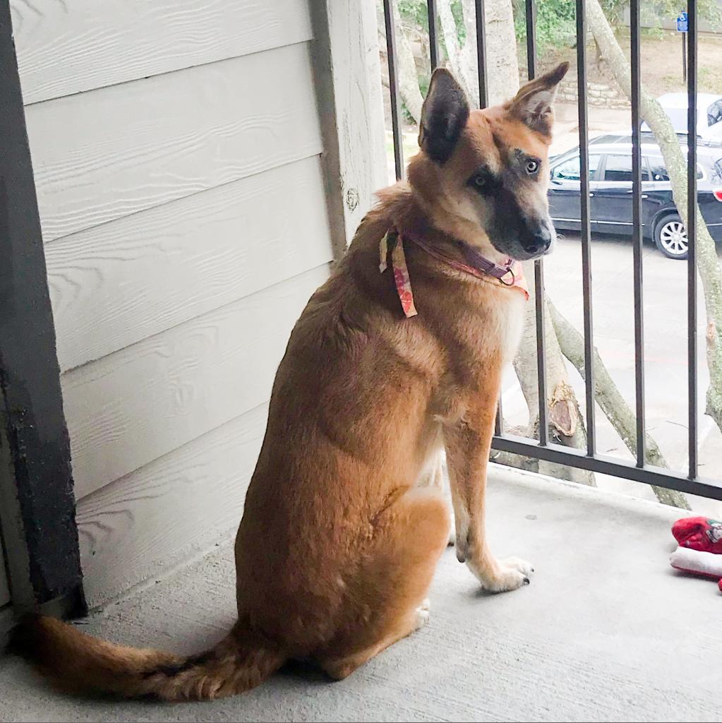 https://www.shelterluv.com/sites/default/files/animal_pics/464/2019/02/11/23/20190211235905.png