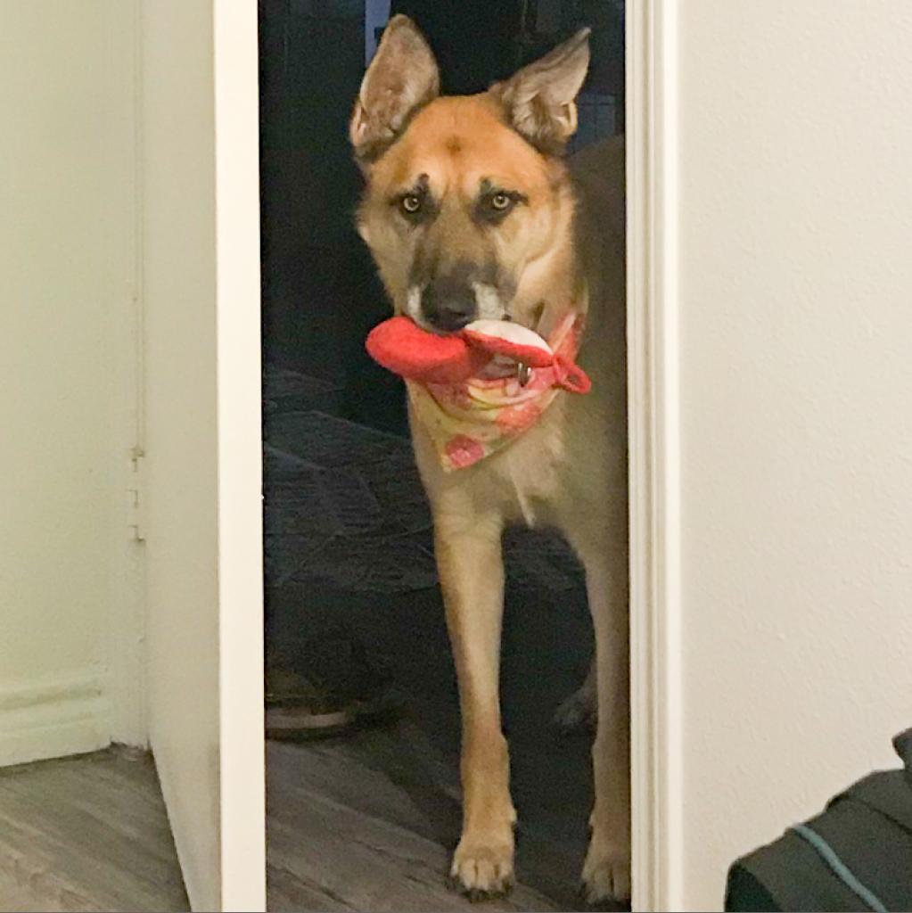 https://www.shelterluv.com/sites/default/files/animal_pics/464/2019/02/11/23/20190211235928.png